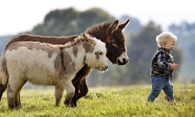 burros mini 2
