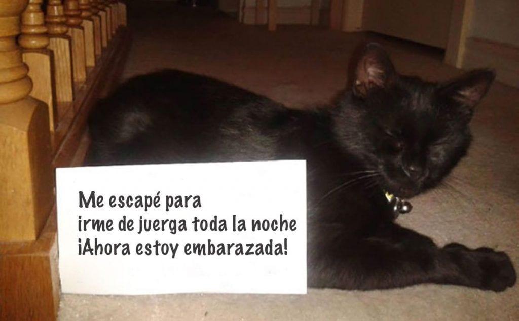 gatos culpables destacada