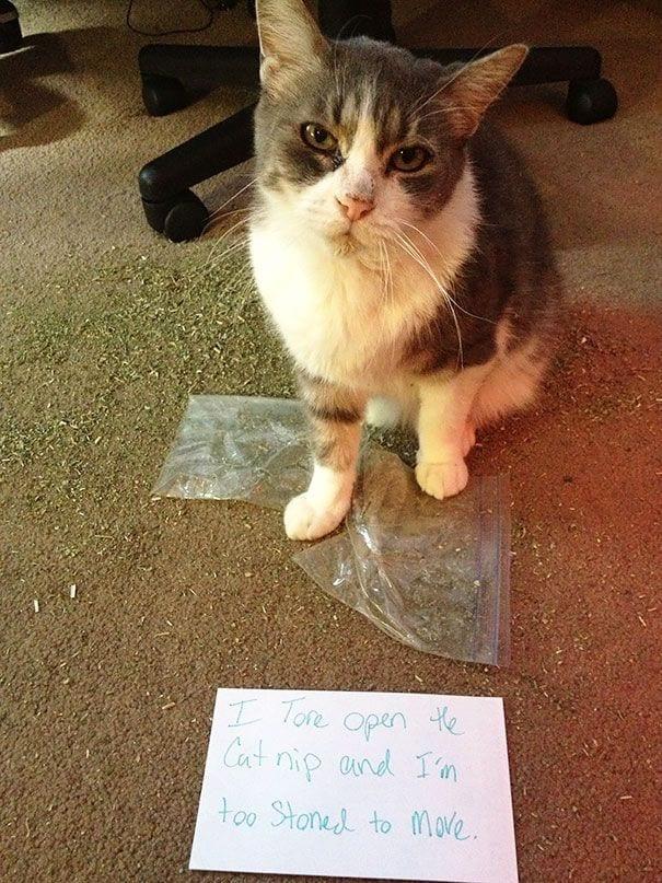 gatos-culpables01