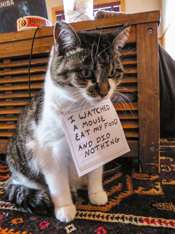 gatos-culpables04