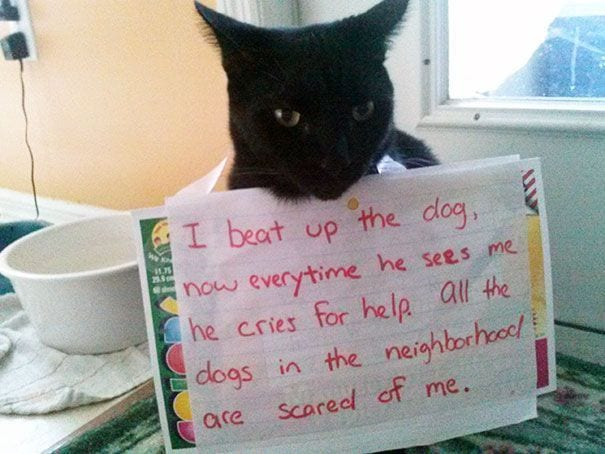 gatos-culpables05