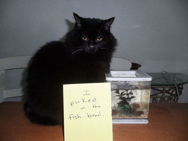 gatos-culpables07