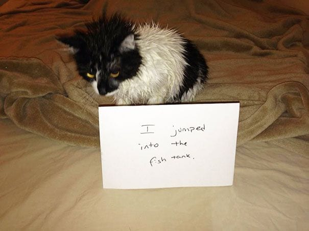 gatos-culpables09