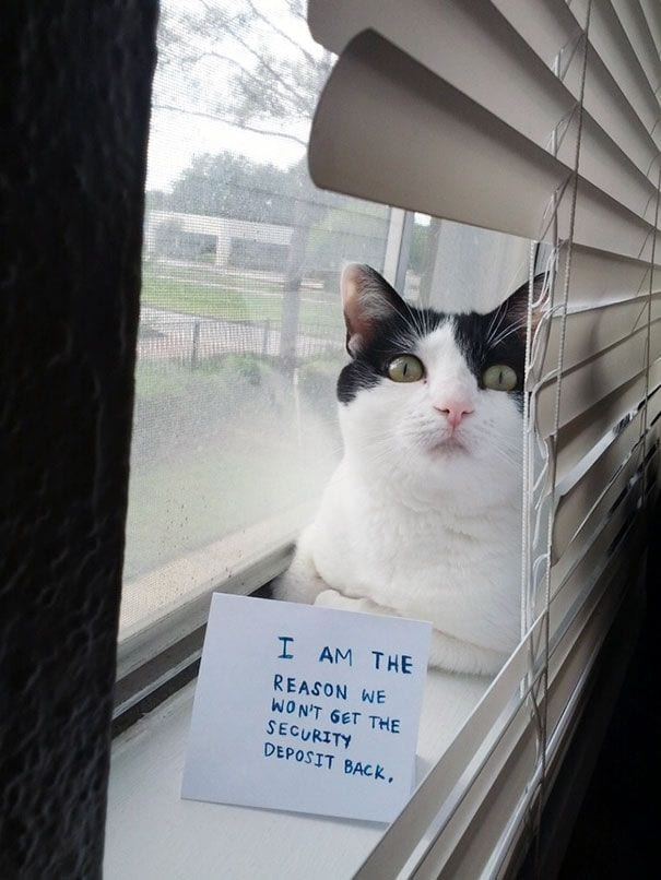 gatos-culpables10