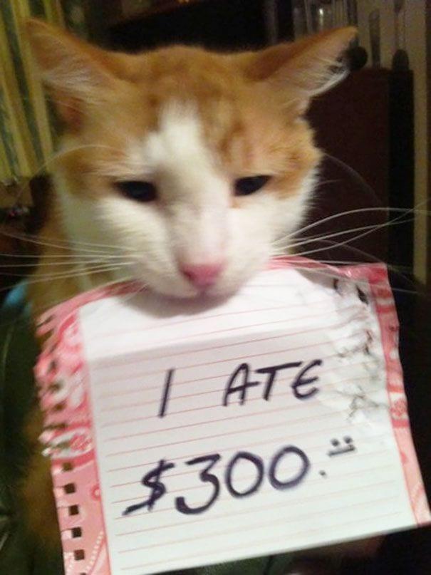 gatos-culpables11