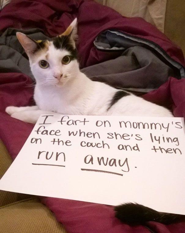 gatos-culpables12