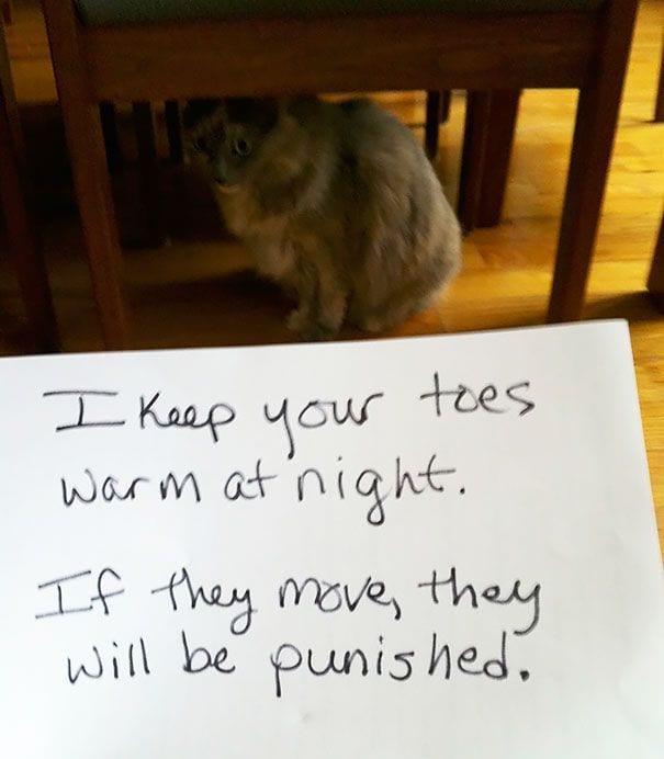 gatos-culpables15
