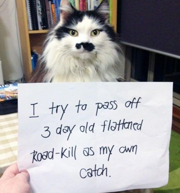 gatos-culpables17