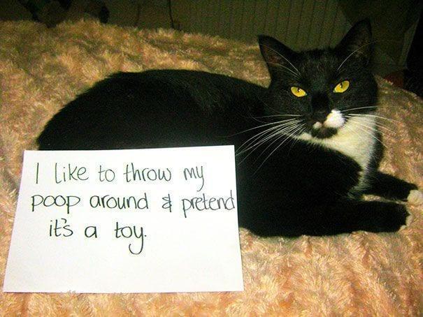 gatos-culpables20