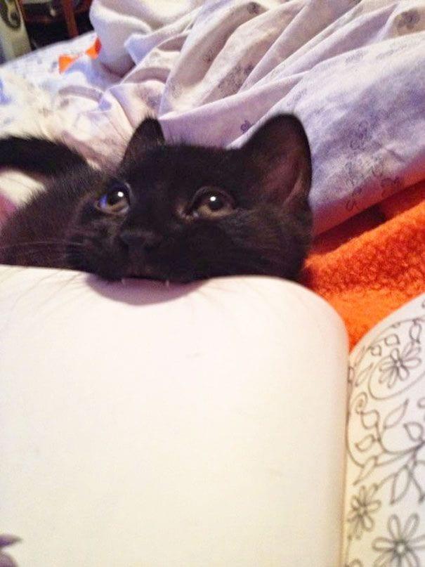 gatos reclamando atencion 11