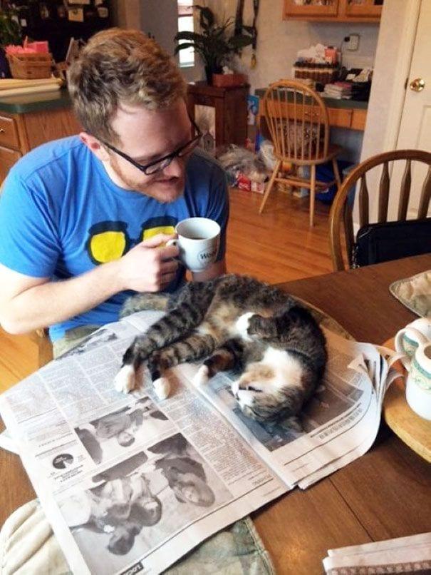 gatos reclamando atencion 13
