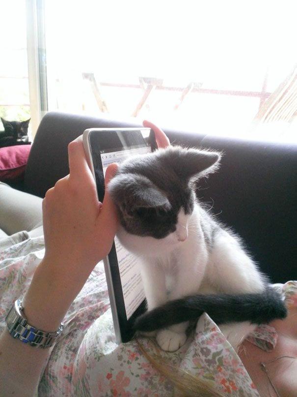 gatos reclamando atencion 14