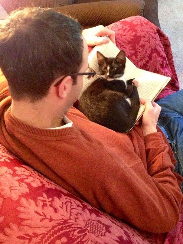 gatos reclamando atencion 15