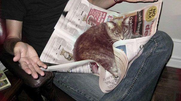 gatos reclamando atencion 16