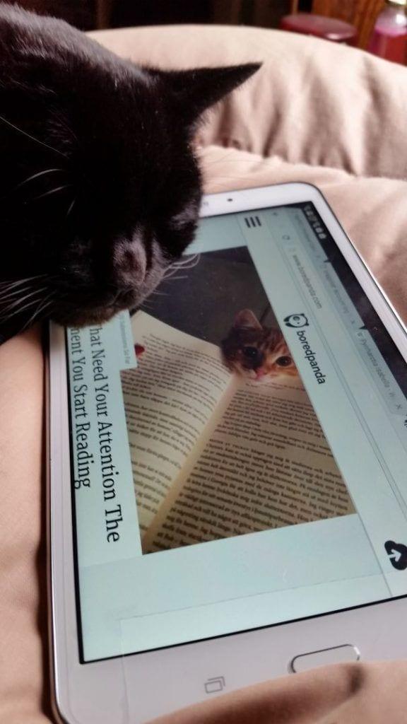 gatos reclamando atencion 18
