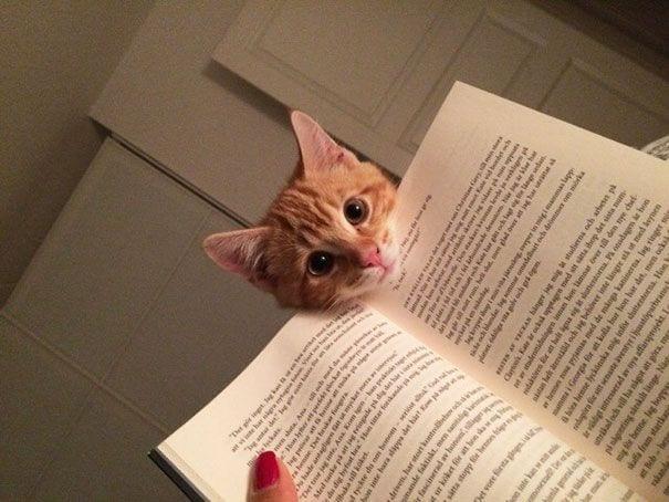 gatos reclamando atencion 2