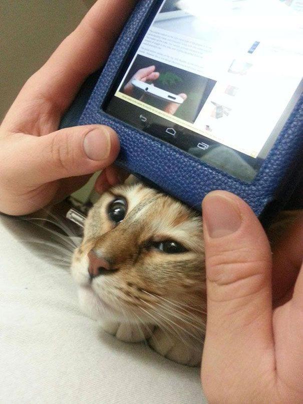 gatos reclamando atencion 23