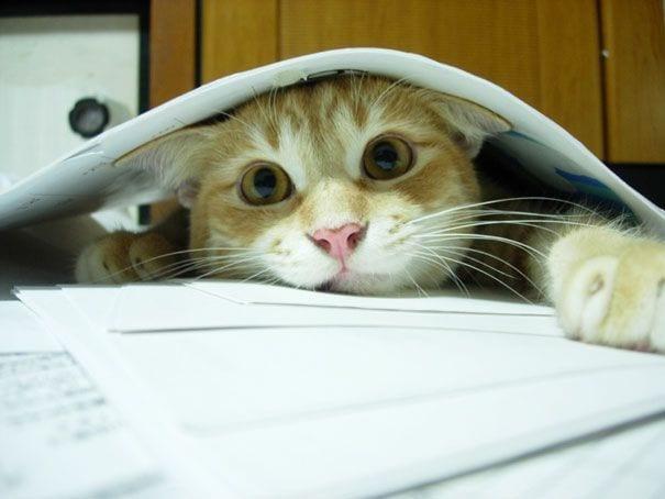 gatos reclamando atencion 24