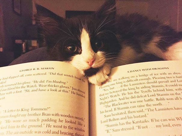 gatos reclamando atencion 25