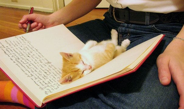 gatos reclamando atencion 3