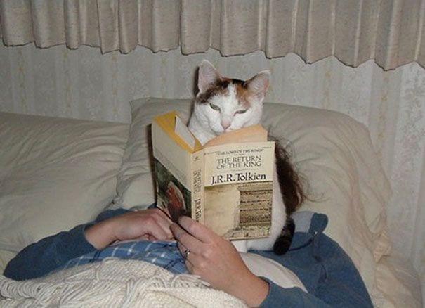 gatos reclamando atencion 5