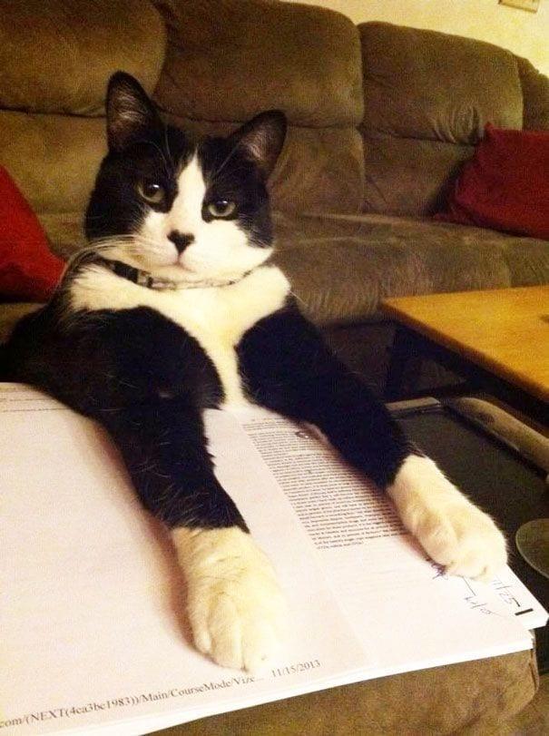 gatos reclamando atencion 9