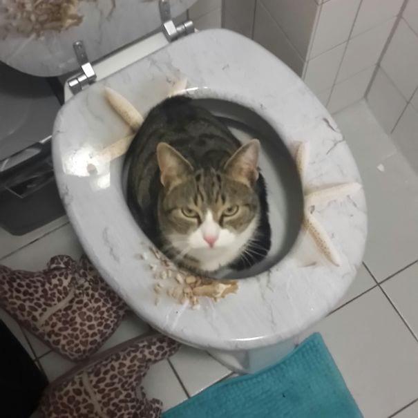 gatos_malvados_24