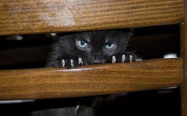 gatos_malvados_4