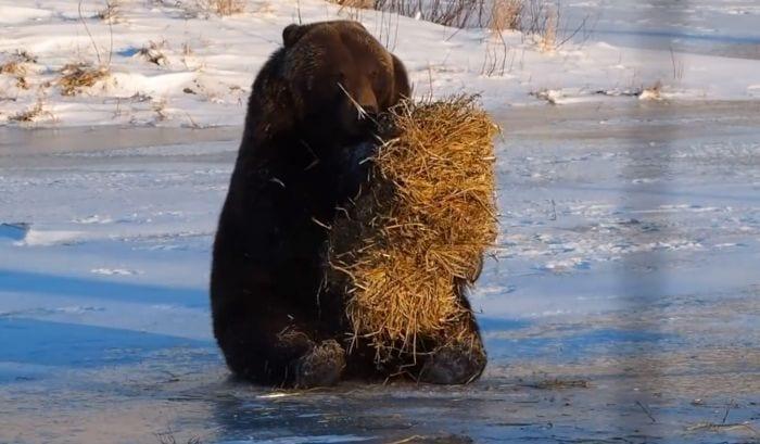 oso jugando