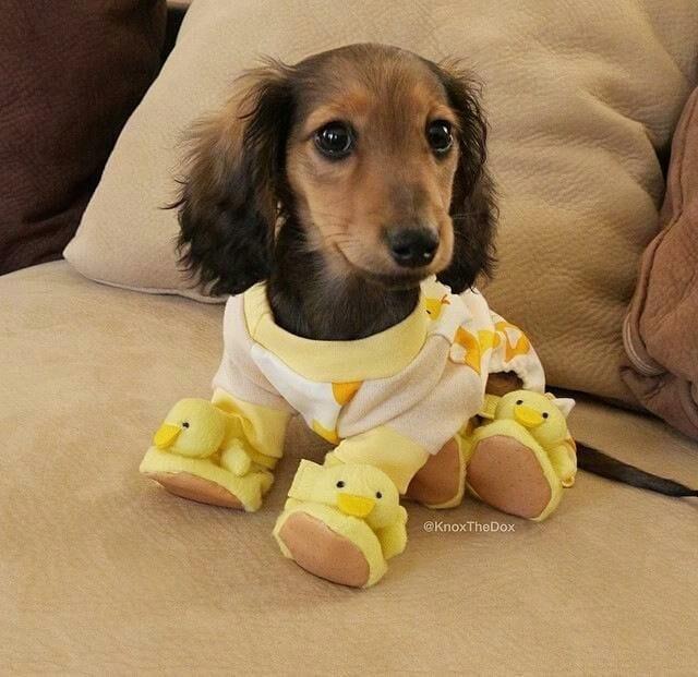 perros-en-pijama-01