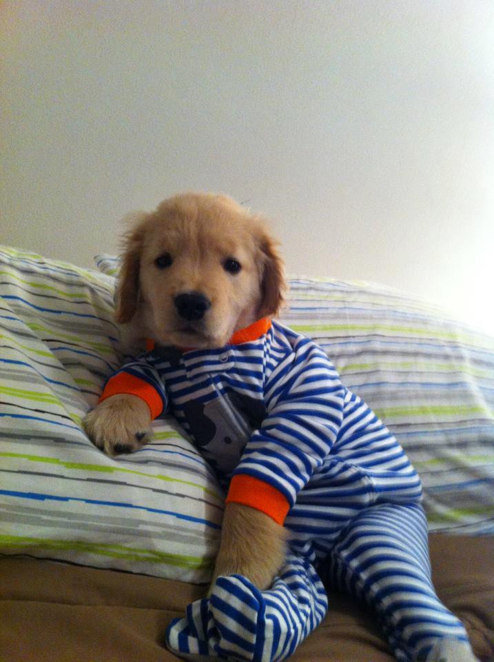 perros-en-pijama-03