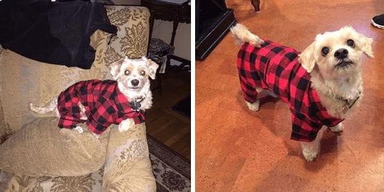 perros-en-pijama-06