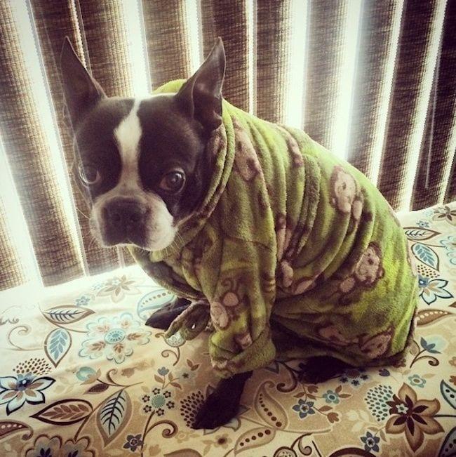 perros-en-pijama-07