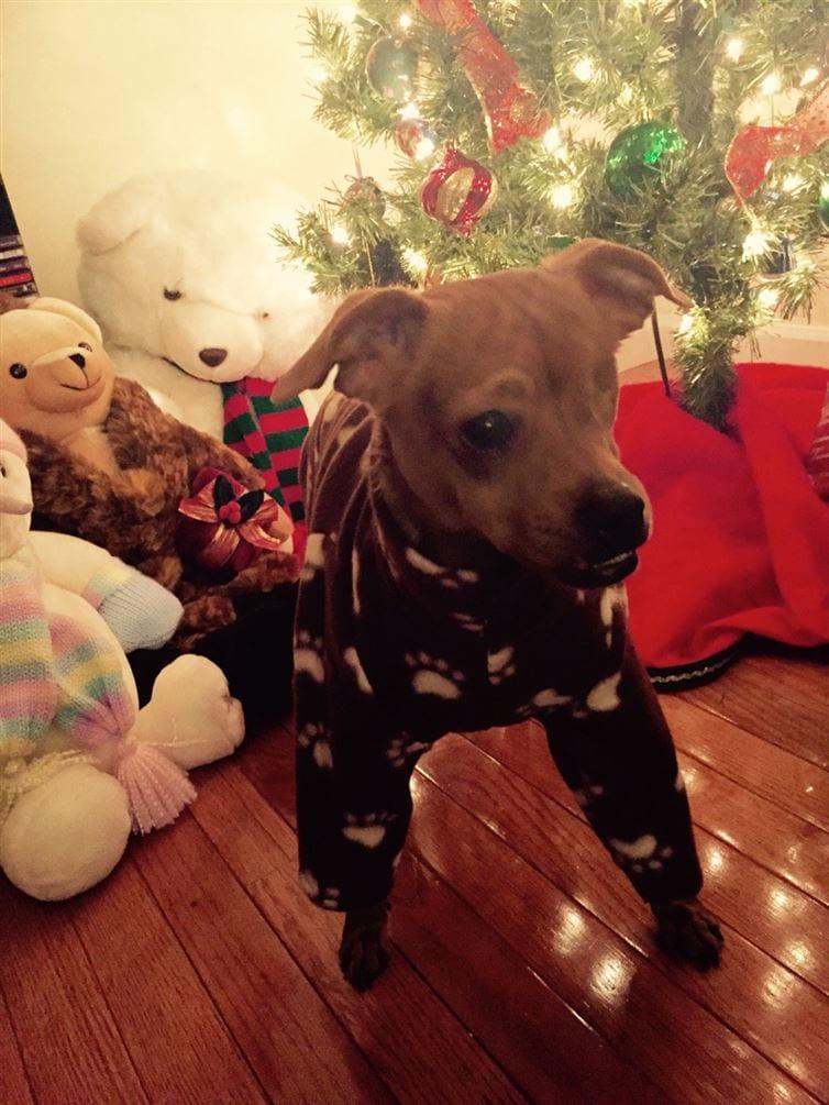 perros-en-pijama-09