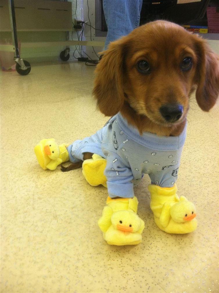 perros-en-pijama-10