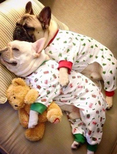 perros-en-pijama-11