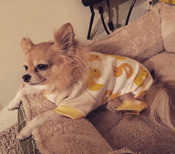 perros-en-pijama-13