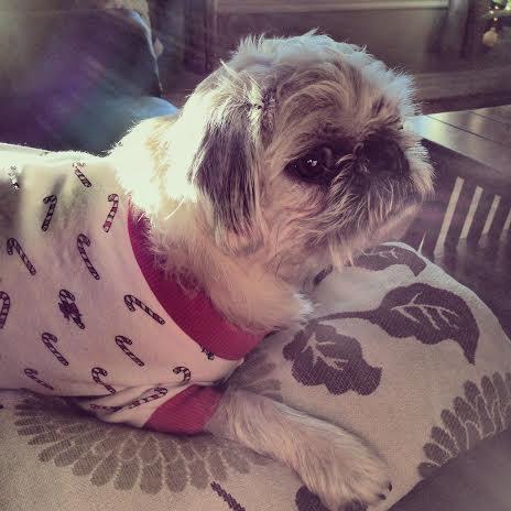 perros-en-pijama-14