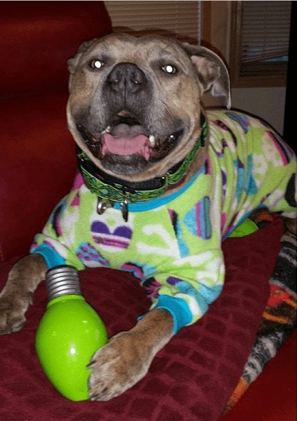 perros-en-pijama-15