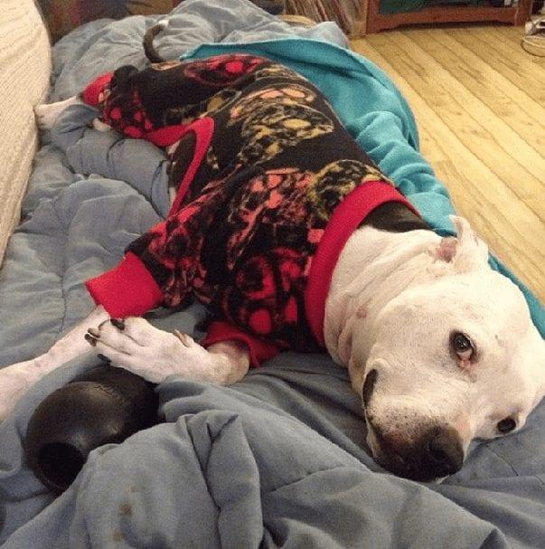 perros-en-pijama-16