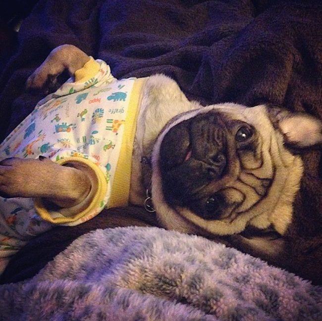 perros-en-pijama-17