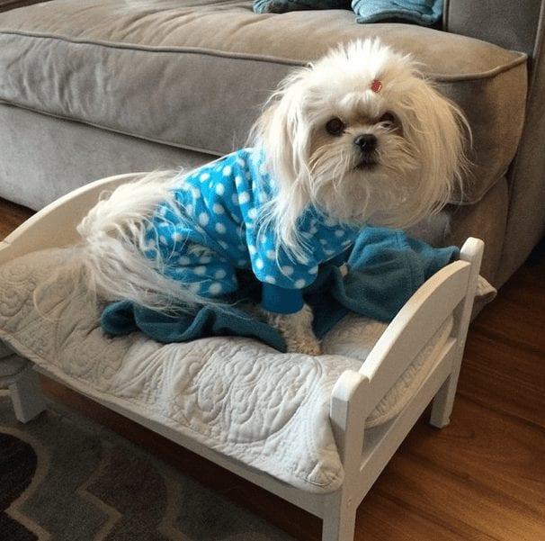 perros-en-pijama-18