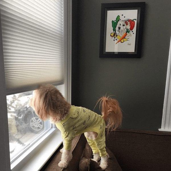 perros-en-pijama-19