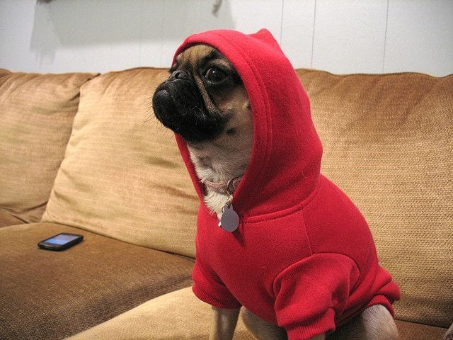 perros-en-pijama-20