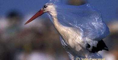 plastico peligro 25