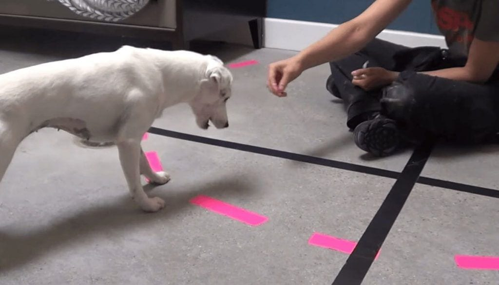 terapia canina 1
