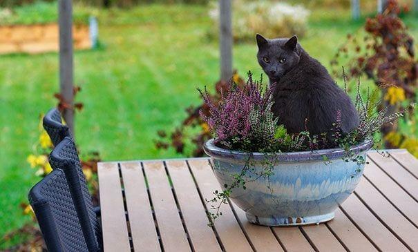 XX-Cat-Plants6__605