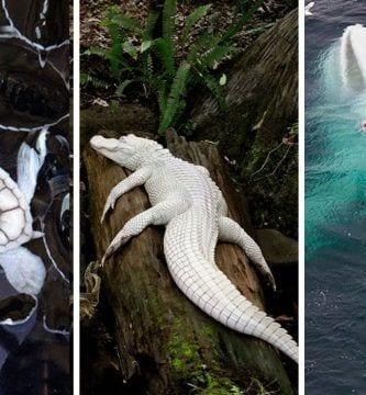 animales albinos dest