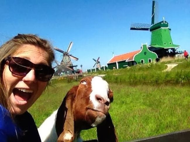 animales cansados selfies 06