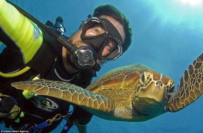 animales-cansados-selfies-20